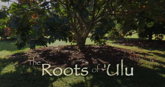 The Roots of 'Ulu